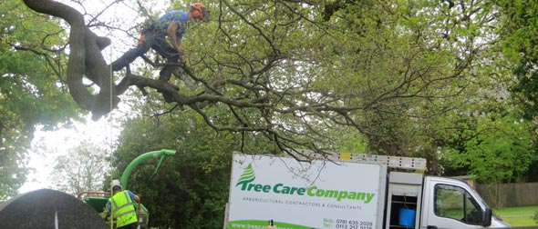 About the Treecare Company