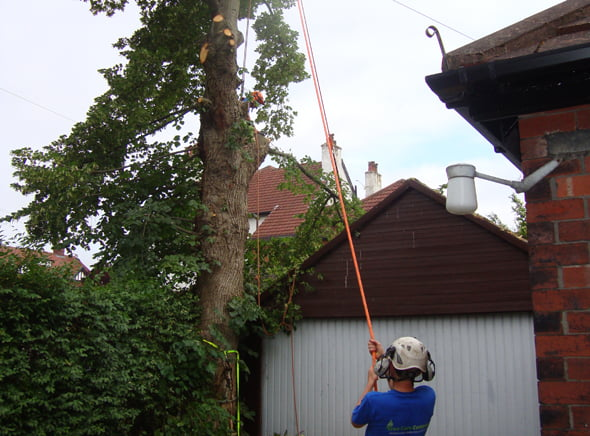 Tree lowering